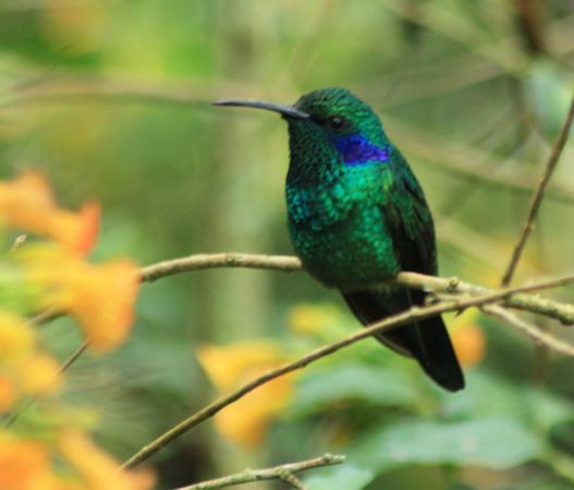 Cerro Punta, Панама: Flora and Fauna at the Finca Dracula