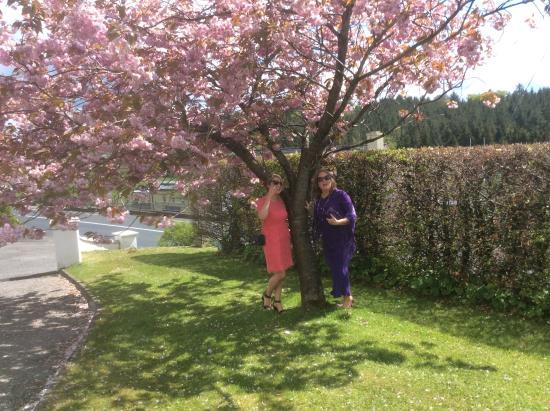 Pettigo, İrlanda: May time @ hilltop