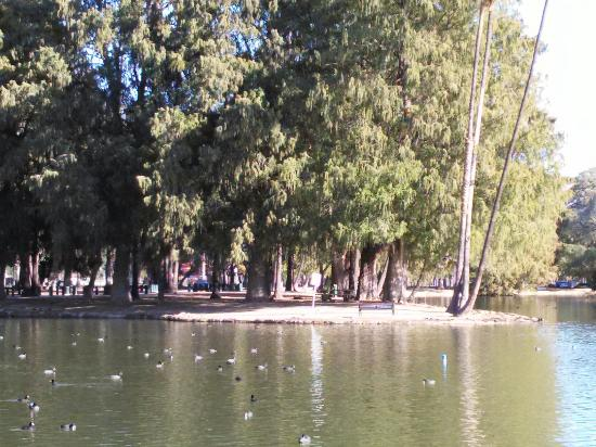 Riverside, Califórnia: This park is gorgeous. Can spend an entire day here easily. Bring bread for the ducks n pack a n