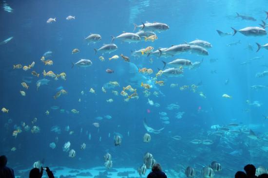 Poissons picture of georgia aquarium atlanta tripadvisor - Poisson shark aquarium ...