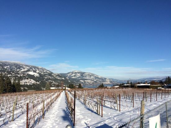 West Kelowna, Canada: Our Vineyard - January 2016