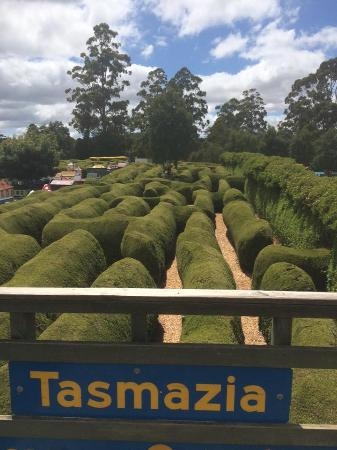 Promised Land, Australien: Tasmazia