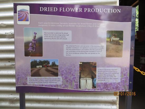 Tasmania, أستراليا: Overview description how it is produced