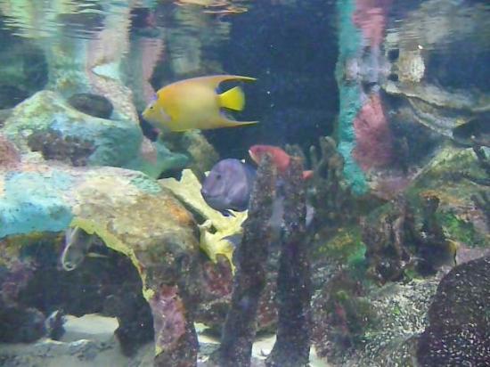 Fish Picture Of Mote Marine Laboratory And Aquarium