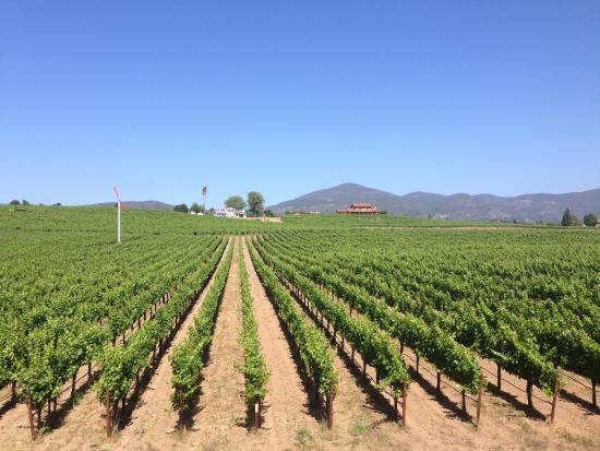 Danville, Kalifornia: miles and miles of vineyards