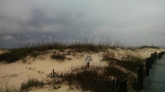 Gulf Shores Plantation : View of the dunes.