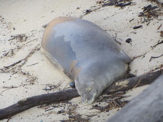 Paia, HI: Ho'okipa Beach