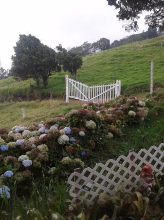 Altura Hotel: Jardin