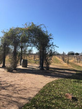 Bryan, TX: Gazebo behind tasting room in Jan