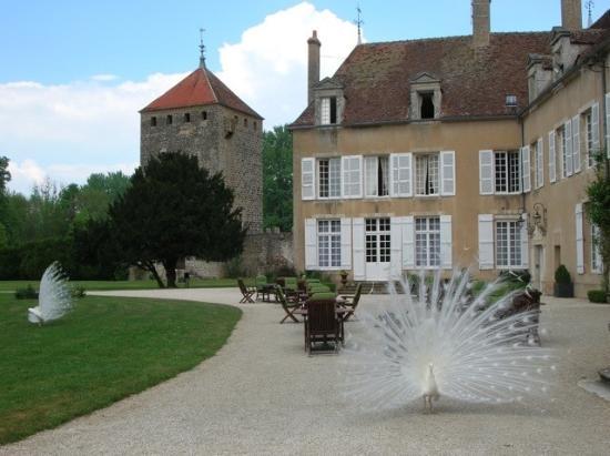 Vault-de-Lugny, France : Chateau and peacocks