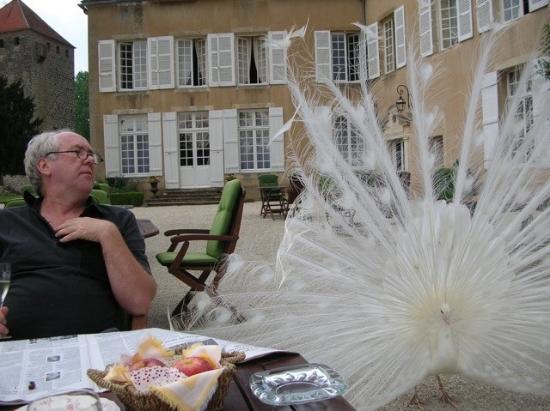 Vault-de-Lugny, France : romanced by a peacock