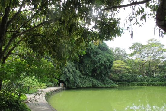 Swan lake picture of singapore botanic gardens for Au jardin singapore botanic gardens