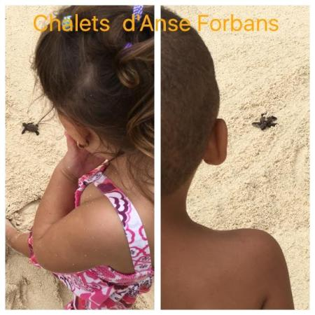 Chalets d'Anse Forbans: Children enjoying the turtle releasing