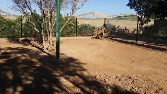 Oulad Teima, Marokko: parc animalier