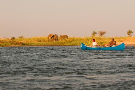 Zimbabwe: More Elephants such peacful HUGE animals
