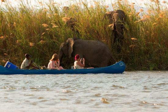 Zimbabwe: Elephants enjoying their swim... seeing lots of them is great too