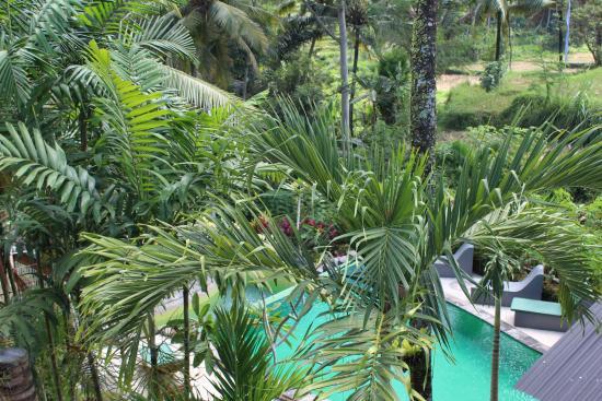 Junjungan Suite Villa: View