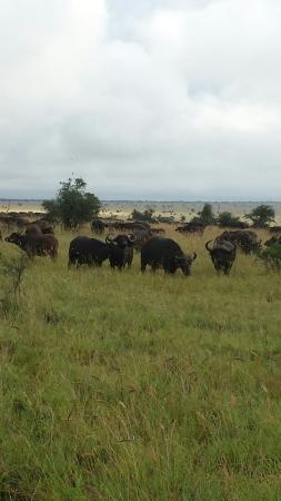 Tsavo, Kenya: The wildlife