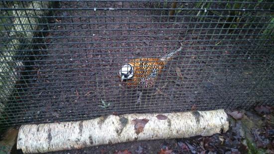 Birmingham Wildlife Conservation Park: DSC_000002_large.jpg