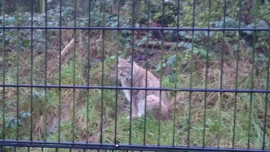 Birmingham Wildlife Conservation Park: DSC_000001_large.jpg