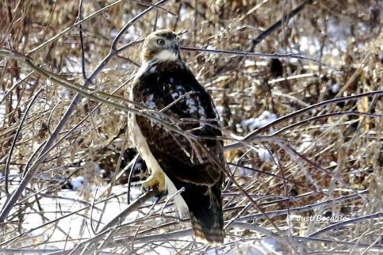Cobblestone Inn and Suites Marquette, IA/Prairie Du Chien: Wildlife in the area