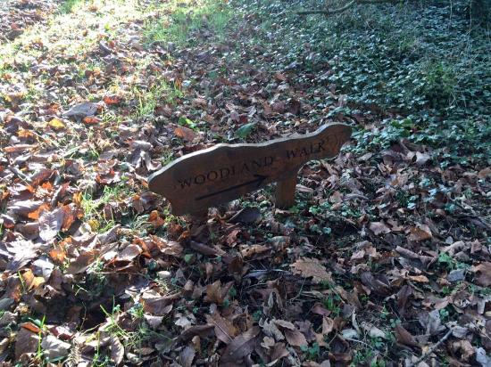 Dunbrody Country House Hotel: Woodland walk