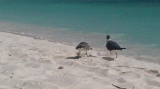 Nuestros vecinos en Playas de Cayo de Agua en Los Roques