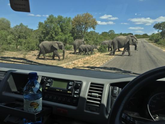 Komatipoort, Sydafrika: A variety of pictures from some of our full day tours