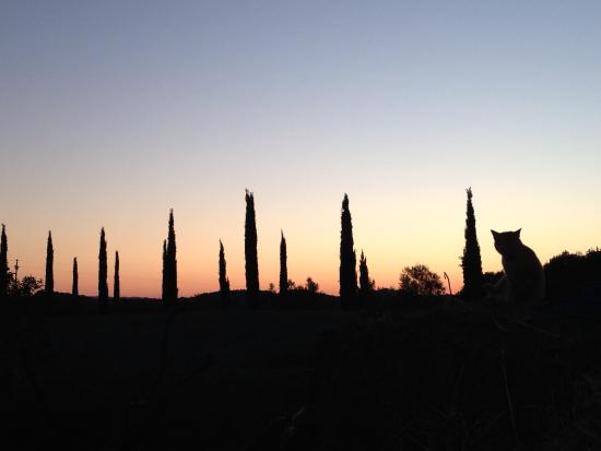Micciano, Italy: tramonto con gatto, sunset with cat