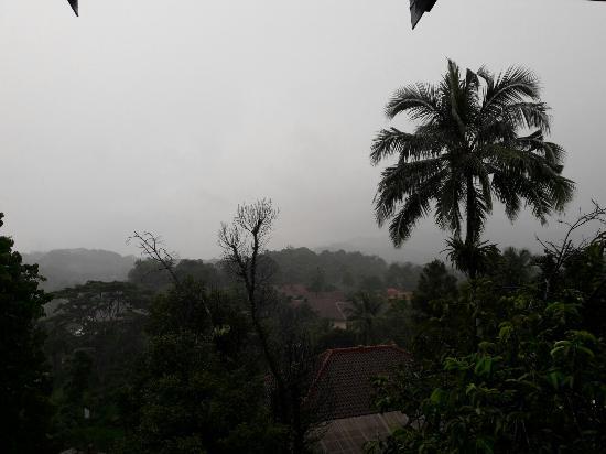 Landscape - Puri Avia