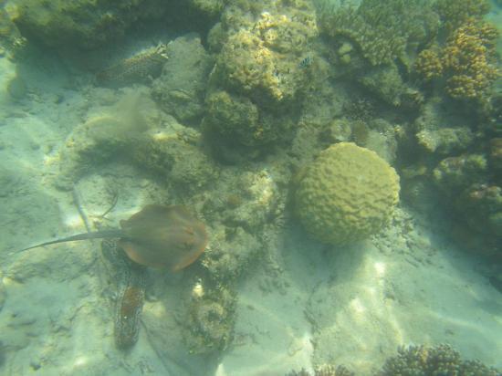 Green Island Resort Diving & Boat Snorkelling Trips: Snorkelling