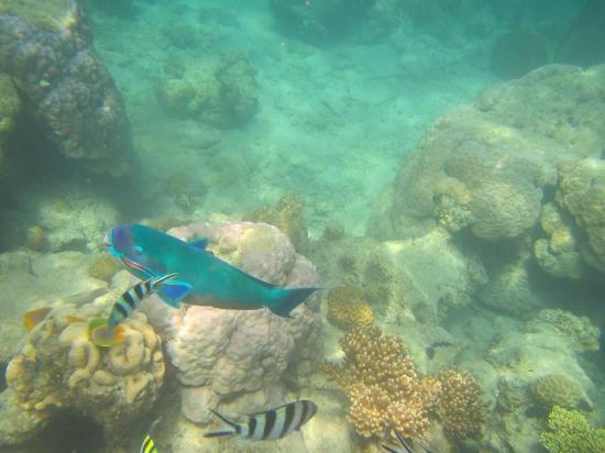 Green Island, Avustralya: Snorkelling