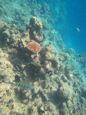 Зеленый остров, Австралия: Snorkelling