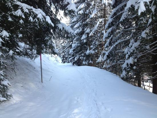 Silbertal, Austria: Snowshoe trail1