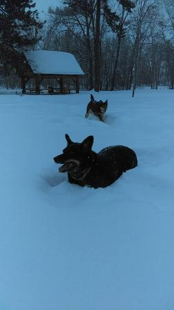 Twisp, WA: Jake and Holly playing in deep snow at the park