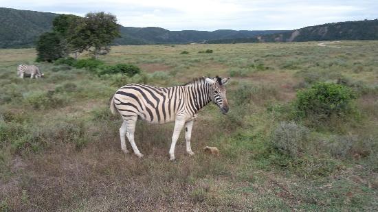 Kenton-on-Sea, Zuid-Afrika: 20160110_170839_large.jpg