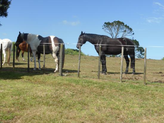 North Shore City, Yeni Zelanda: Don's horses