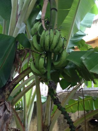 Ocean Lofts: BananaTree