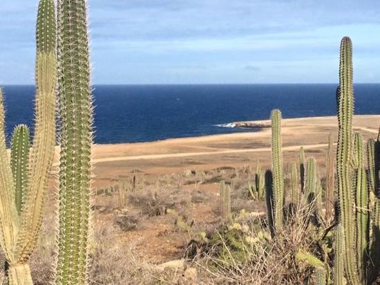 Paradera, Aruba: Cactus forest