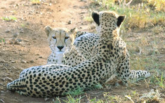 Mkuze, جنوب أفريقيا: Fotor_145299101171652_large.jpg