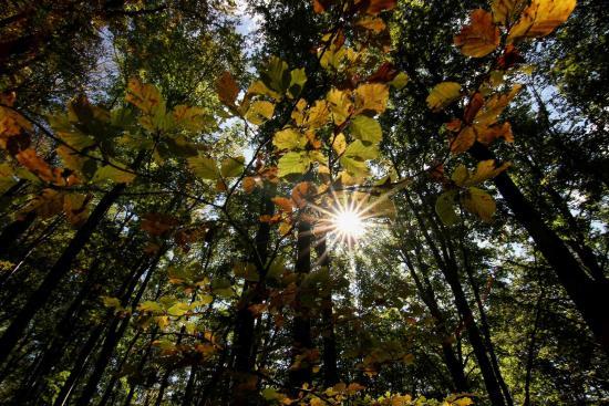 San Marcello Pistoiese, Italia: i colori dell'autunno