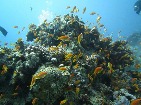 Black Rock Dive Centre: IMG_0459_large.jpg