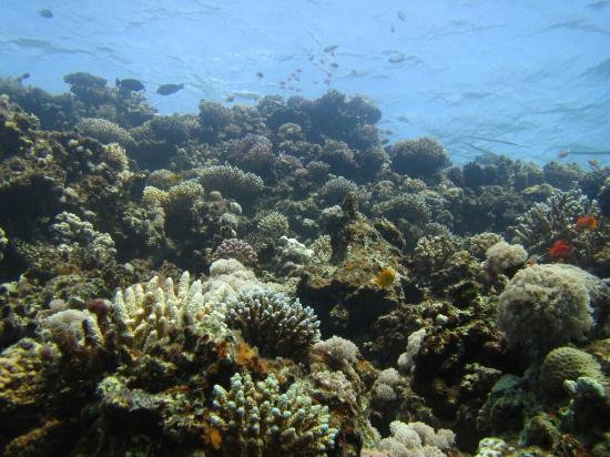 Black Rock Dive Centre: IMG_0467_large.jpg