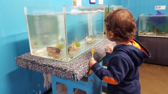 Kaikoura Marine Aquarium: My son (2) looking at the baby crayfish in a tank