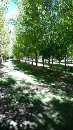 Cabanas Uspallata: jardin