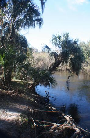 Bowling Green, FL: Peace River on the Peace River Trail - 2