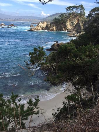 Point Lobos Photo
