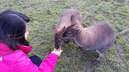 Waimate, New Zealand: It was awesome!