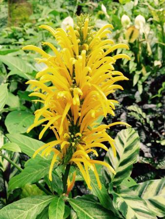 Papaikou, Havaí: photo1.jpg