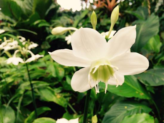 Papaikou, Havaí: photo2.jpg